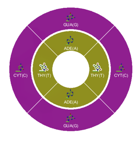 File:Level 8-3 DNA Pairing DNA Wheel.png