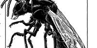 Giant mason wasp