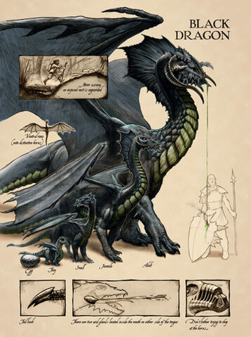File:Black dragon anatomy - Lars Grant-West.jpg