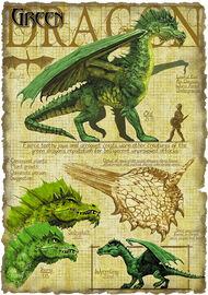 Green dragon anatomy - Richard Sardinha