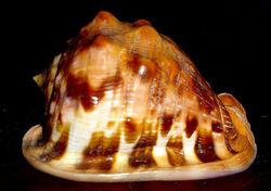 Flame helmet shell1