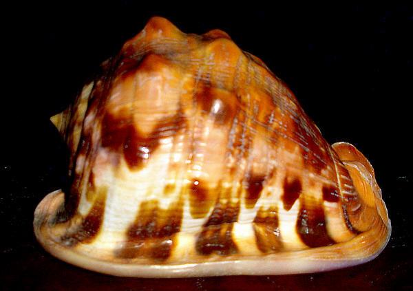 File:Flame helmet shell1.jpg