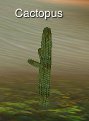 PlantCactopus