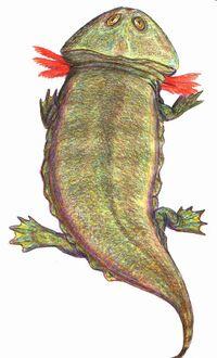 Plagiosaurus DB