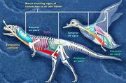 Dino bird resp2