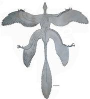 Microraptor4