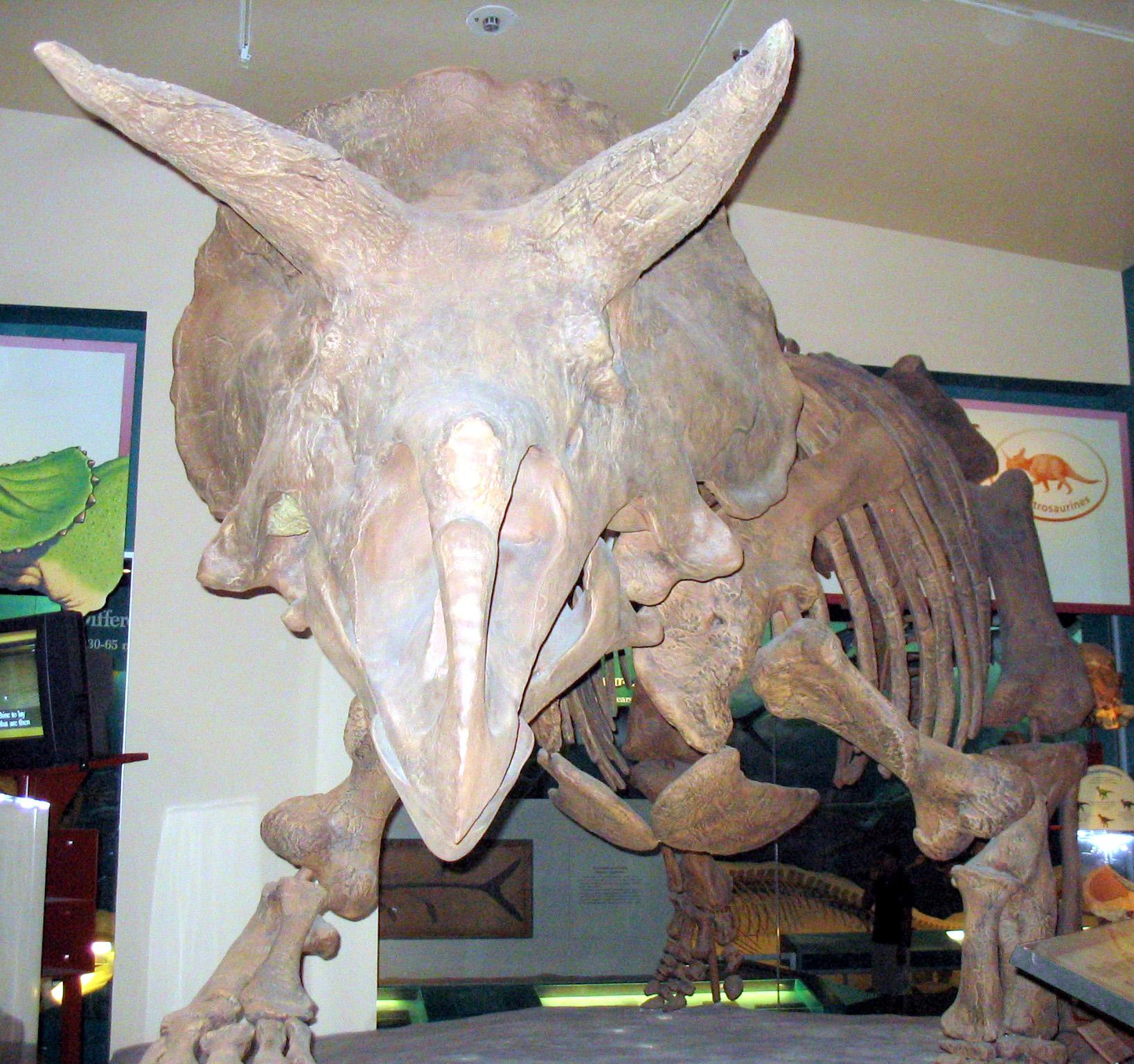Ceratopsia | Fossil Wiki | Fandom powered by Wikia