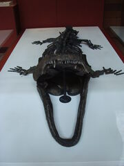 Paracyclotosaurus davidi.001 - Natural History Museum of London