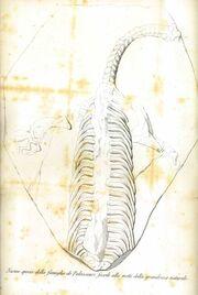 Politecnico-Palaeosaurus