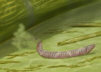 Adelospondylus2