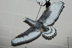 Amnh sapeornis1