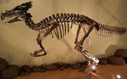 Dracorex2