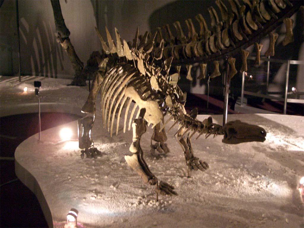 Chungkingosaurus | Fossil Wiki | FANDOM powered by Wikia