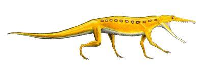 Chanaresuchus
