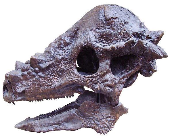 File:Pachycephalosaurus (1).jpg