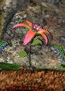 Planterose