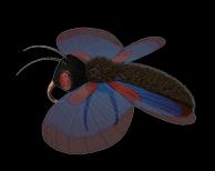 Fichier:Papillon.png