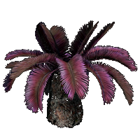 File:Sago Palm.png