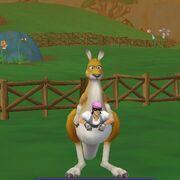 Kangaroo Ride