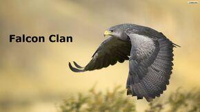 Falcon clan pic
