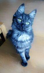 220px-Cat1