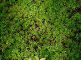File:Moss.png