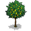 Pear Tree Fruit-icon