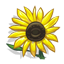 Learn About Sunflowers-icon