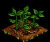 File:Potatoes green.png