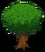 Oak Tree Large-icon