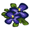 Pansies Quest-icon