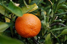 File:220px-TangerineFruit.jpg