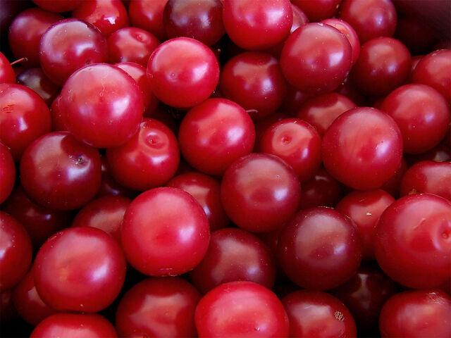 File:Cherry plums.jpg