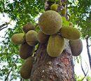 Fruitluck Wiki