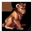 628-lion-cub