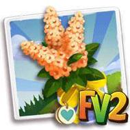 Heirloom Orange Cassia Bouquet