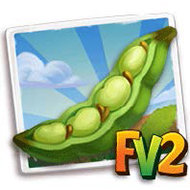 Sweet Lorane Fava Beans Crop