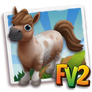 Pintaloosa Mini Horse