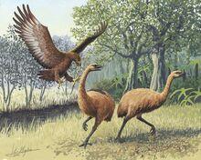 XGiant Haasts eagle attacking New Zealand moa 1 v 1401704217.jpg.pagespeed.ic.0miibzcXCP