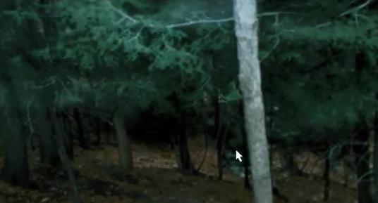File:Forest view form bedroom.jpg