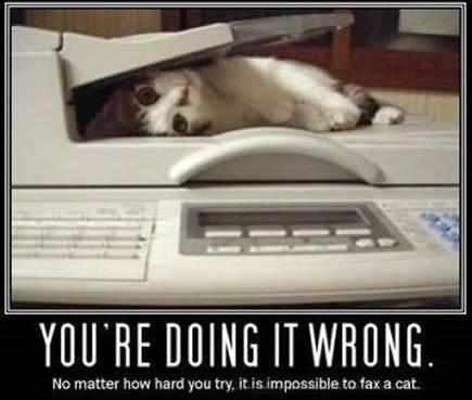 File:Catfax.jpg