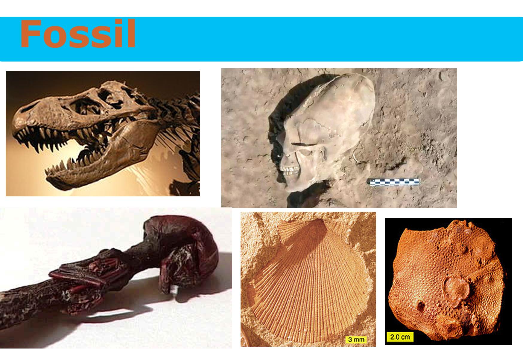 Image - Fossil.png | Galnet Wiki | FANDOM powered by Wikia
