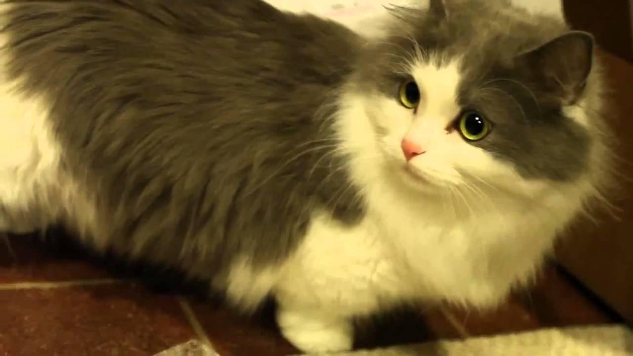 Cat Games Kitten Games