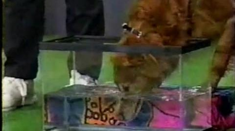 That's My Dog Wahoo vs. Hondo