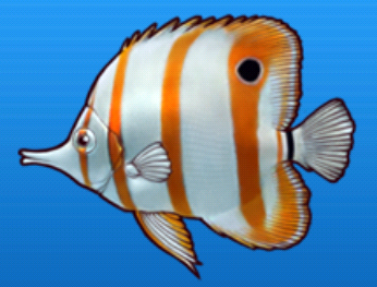 File:Butterflyfish.png