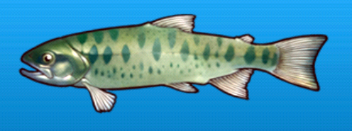 File:Cherry salmon.png