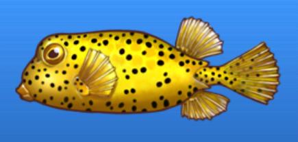 File:Polka dot boxfish.png