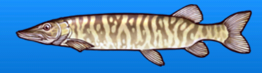 File:Musky.png