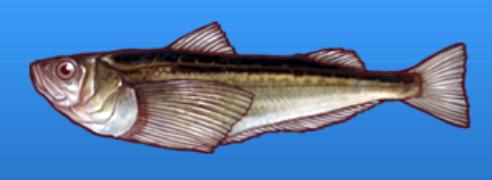 File:Sandfish.png