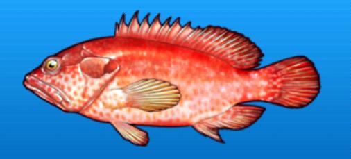 File:Leopard grouper.png